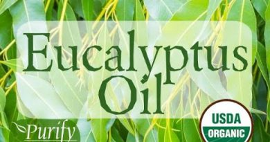 Eucalyptus Essential Oil ~ All You Ever Need To Know