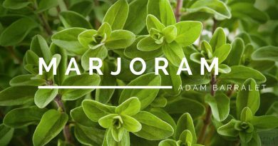 Marjoram - The Oil of Contented Union