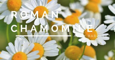 Roman Chamomile - The Oil of Gentleness