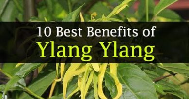 Ylang Ylang Essential Oil Benefits for Hair, Face, Skin