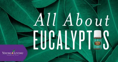 All About Eucalyptus | Young Living Essential Oils