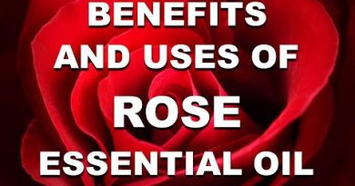 Benefits and Uses of Rose Essential Oil