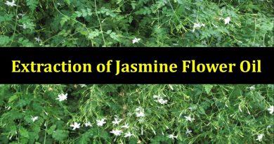Extraction of Jasmine Flower Oil