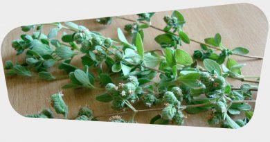Health Benefits of Marjoram Leaves