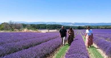 Lavender Essential Oil: Path to Product Quality | NOW Essential Oils