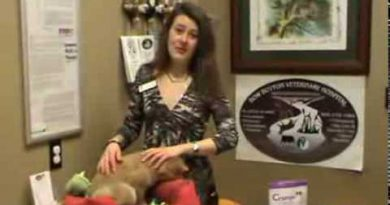 Veterinarian in Calgary teaches how to apply Essential oils to your pet.