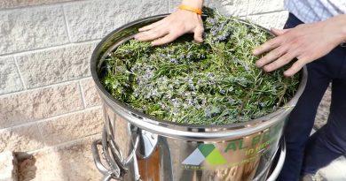 Distillation of Rosemary essential oil - distiller plus