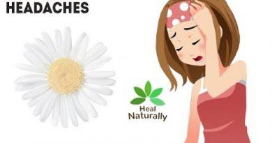 Top 10 Health Benefits of Chamomile