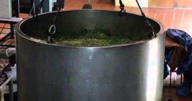 WISI Essential Oil Distillation Process