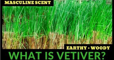 What Is Vetiver? All About Vetiver Fragrances W/Bruno Fazzolari 🌿🌿🌿