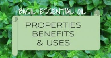 Basil  Essential Oil - Benefits & Uses