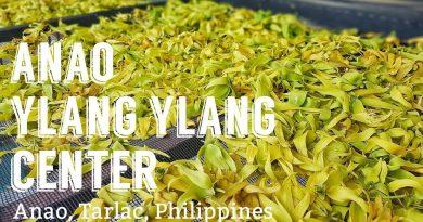 ANAO YLANG-YLANG CENTER   Ylang-ylang essential oil producer