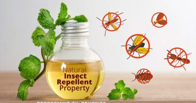 PEPPERMINT OIL BENEFITS : the Essential facts