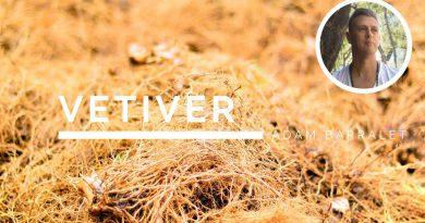 Vetiver - The Oil of Stillness