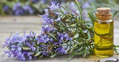 DIY Rosemary Oil At Home For Hair And Skin(Fast Method)