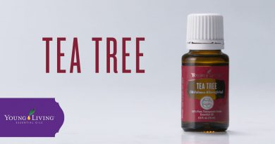 Tea Tree Essential Oil: Benefits & Uses | Young Living Essential Oils