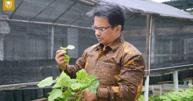Innovative Technology to Extract Patchouli Oil