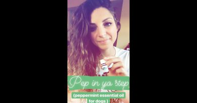 PEPPERMINT ESSENTIAL OIL USES FOR DOGS