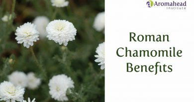 Three Roman Chamomile Benefits
