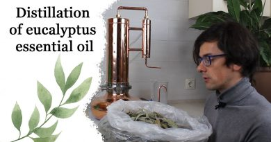 How to make essential oil - Eucalyptus oil - Steam distillation