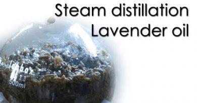 Steam distillation - Lavender essential oil 🌿