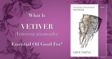 What is Vetiver Essential Oil Good For