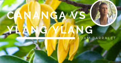 What's the Difference between Ylang Ylang & Cananaga Oils - Do You Need Both?