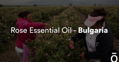 Where Does Rose Essential Oil Come From? | Behind the Bottle