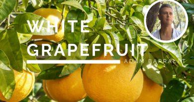 White Grapefruit - The Oil of Divinity
