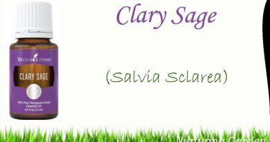 Essential Oils 101: Clary Sage