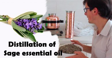 How to make clary sage essential oil at home using copper still - Steam distillation shown