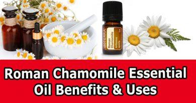 Roman Chamomile Essential Oil Benefits & Uses