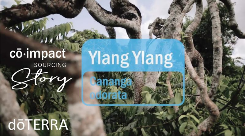 Ylang Ylang Essential Oil - doTERRA Sourcing Story