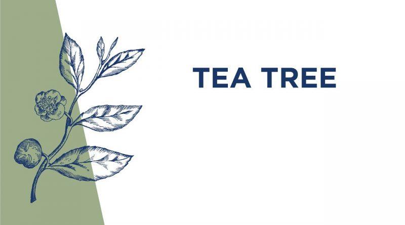 Tea Tree Essential Oil Usage
