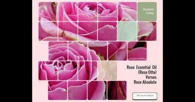 rose essential oil or rose absolute