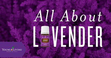 All About Lavender | Young Living Essential Oils