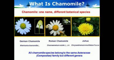 Classification of chamomile flowers, Essential oils and commercial products utilizing Chemometrics