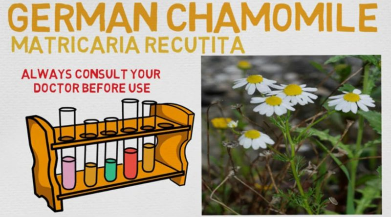 Essential Oil Breakdown: German Chamomile Oil! Benefits, Uses, and History (Aromatherapy)