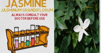 Essential Oil Breakdown: Jasmine Oil! Benefits, Uses, and History (Aromatherapy)