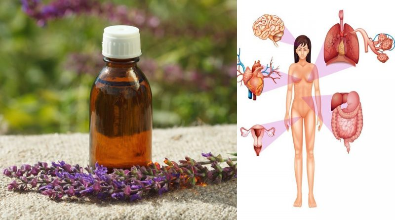 Clary Sage Essential Oil - 6 Amazing Benefits