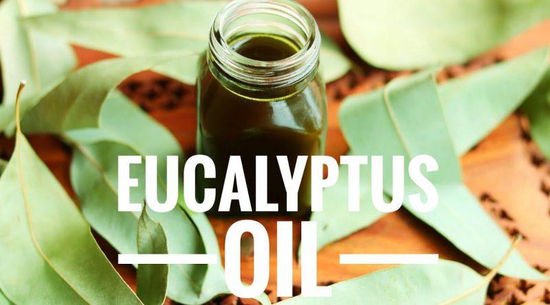 Eucalyptus Oil || How to make Eucalyptus Infused Oil