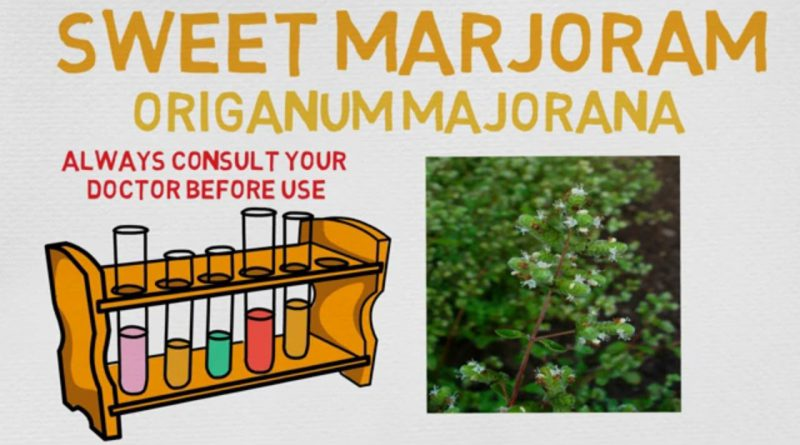 Essential Oil Breakdown: Sweet Marjoram Oil! Benefits, Uses, and History (Aromatherapy)
