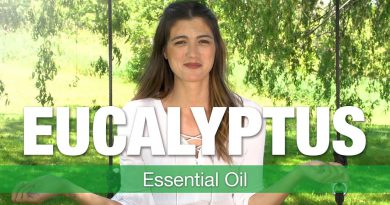 Essential Oil Series - Eucalyptus