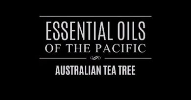 Essential Oils of the Pacific: Australian Tea Tree