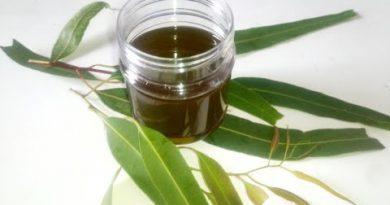 Eucalyptus Oil: How to Make Eucalyptus oil for Hair, Skin & Cold | Eucalyptus oil Benefits & Uses