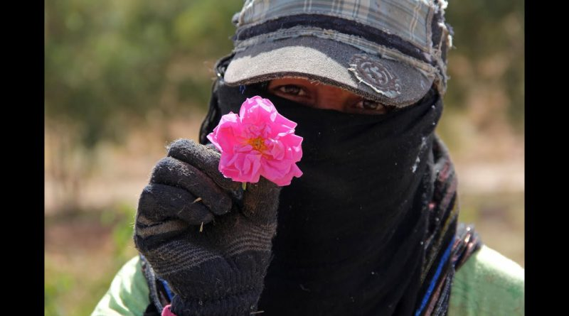 The Story of Floracopeia's Moroccan Rose Essential Oil
