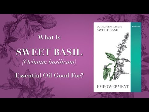 What Is Sweet Basil Essential Oil Good For Video 1 of 2