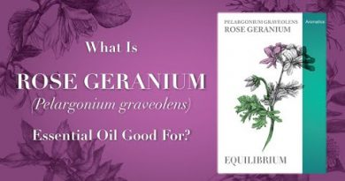 What is Geranium Essential Oil Good For? Video 1 of 2
