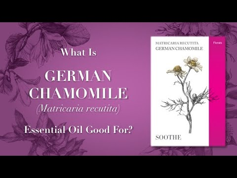 What is German Chamomile Essential Oil Good For Video 1 of 2