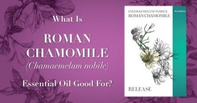Roman Chamomile Essential Oil - What is Roman Chamomile Essential Oil Good For?